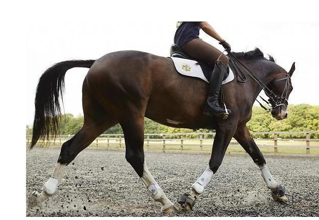 Schooling Livery